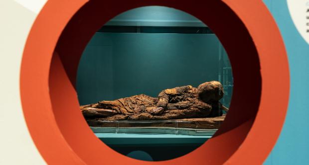 Ricercatori UniTo ricavano informazioni molecolari da una mummia egizia senza pregiudicare l'integrità del reperto