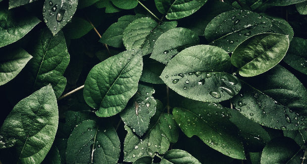 Plant Health 2020, la salute delle piante e salute dell'uomo